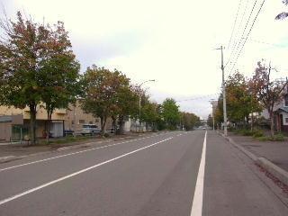 121002街路樹3.jpg