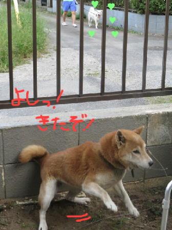 140921アミ攻撃3.jpg
