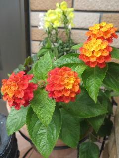 140928花.jpg